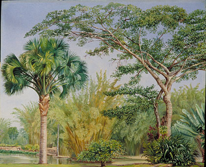 Kew Marianne North Gallery Painting 71 Palm Bamboos