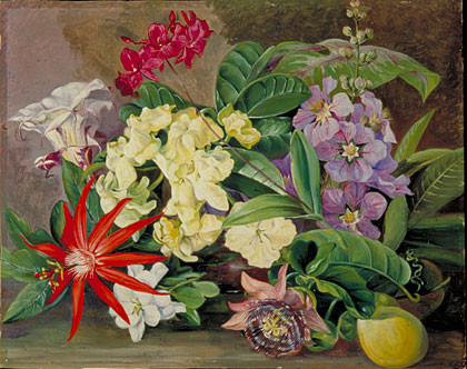 Flower Garden on North Gallery  Painting 147  Cultivated Flowers  Painted In Jamaica