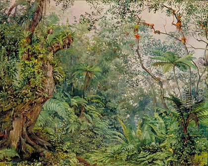 View in the fernwalk jamaica
