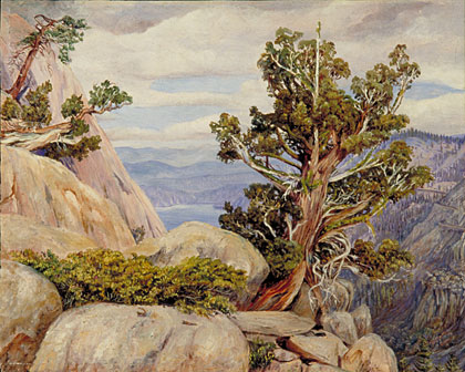 Kew Marianne North Gallery Painting 188 Old Cypress Or