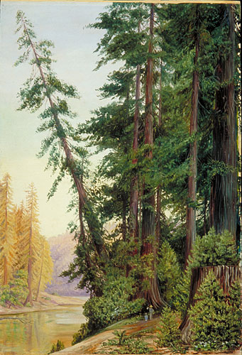View in a Redwood Forest  CaliforniaRedwood Tree Painting