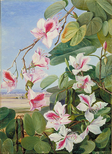 kew  marianne north gallery  painting 221  foliage