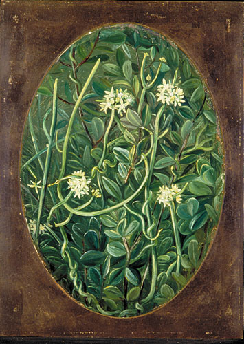 Kew Marianne North Gallery Painting 308 The Soma Lata