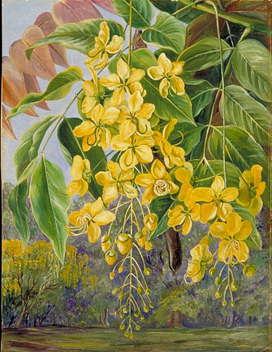 Kew Marianne North Gallery Painting 336 Foliage And