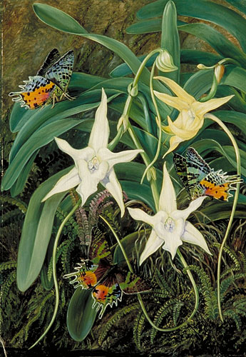 Kew: Marianne North Gallery: Painting 51: Foliage and Flowers of a ...
