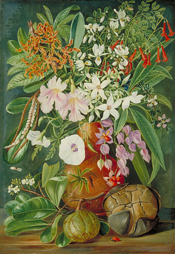 A Selection of Flowers, Wild and Cultivated, with Puzzle Nut, Mahe