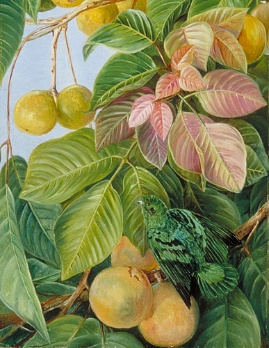 http://www.kew.org/mng/gallery/img_large/537.jpg