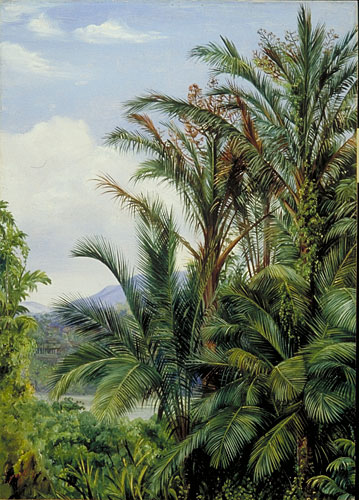 Sago Palms in flower, with a glimpse of the river at Sarawak, Borneo