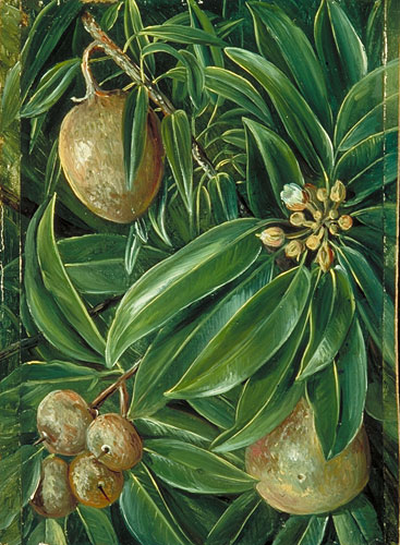 kew  marianne north gallery  painting 605  foliage