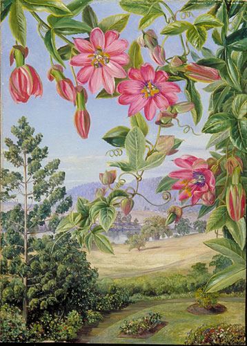 kew  marianne north gallery  painting 738  view in the