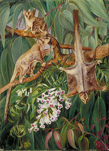 Kew Marianne North Gallery Painting 746 Foliage Of A