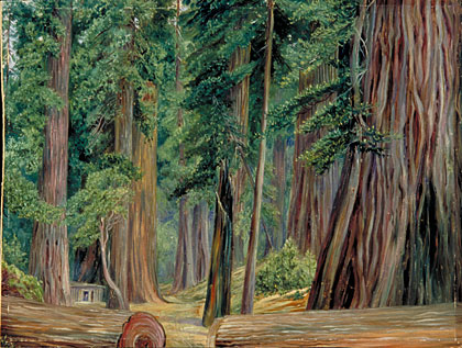 Kew: Marianne North Gallery: Painting 173: Under the ... Redwood Tree Painting