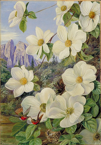 Kew Marianne North Gallery Painting 190 Foliage And Flowers Of