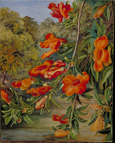 kew marianne north gallery painting 233 foliage and