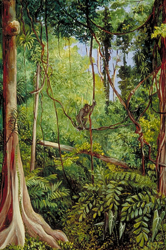 Kew Marianne North Gallery Painting 545 Forest Scene