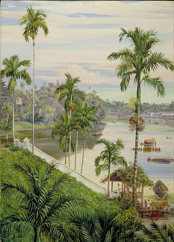 Kew Marianne North Gallery Painting 568 View Down The