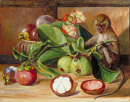 Kew Marianne North Gallery Painting 577 Flowers And