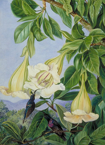 Kew Marianne North Gallery Painting 600 Foliage And