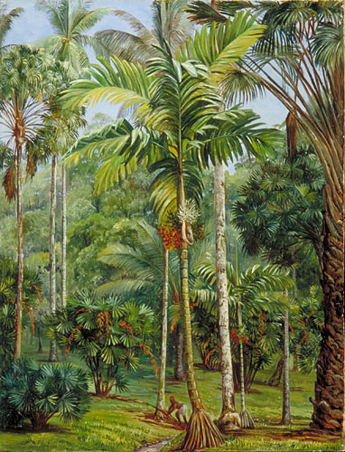 Kew: Marianne North Gallery: Painting 682: Group of Palms, Botanic ...