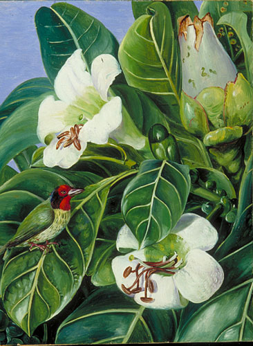 kew marianne north gallery painting 695 foliage and