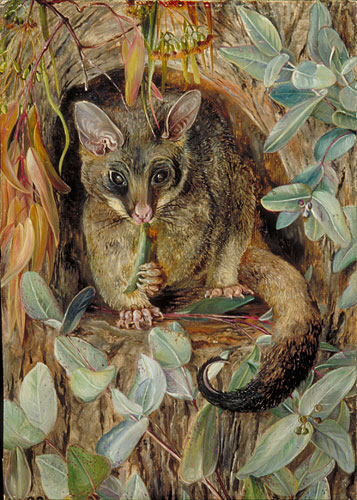 kew  marianne north gallery  painting 748   u0026quot possum up a