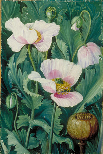 Kew Marianne North Gallery Painting 793 Foliage