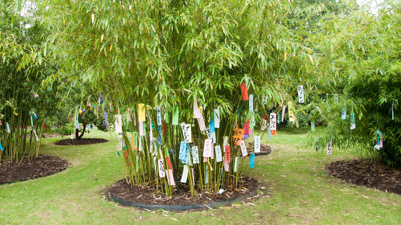 Bamboo garden and minka house kew for Bamboo garden