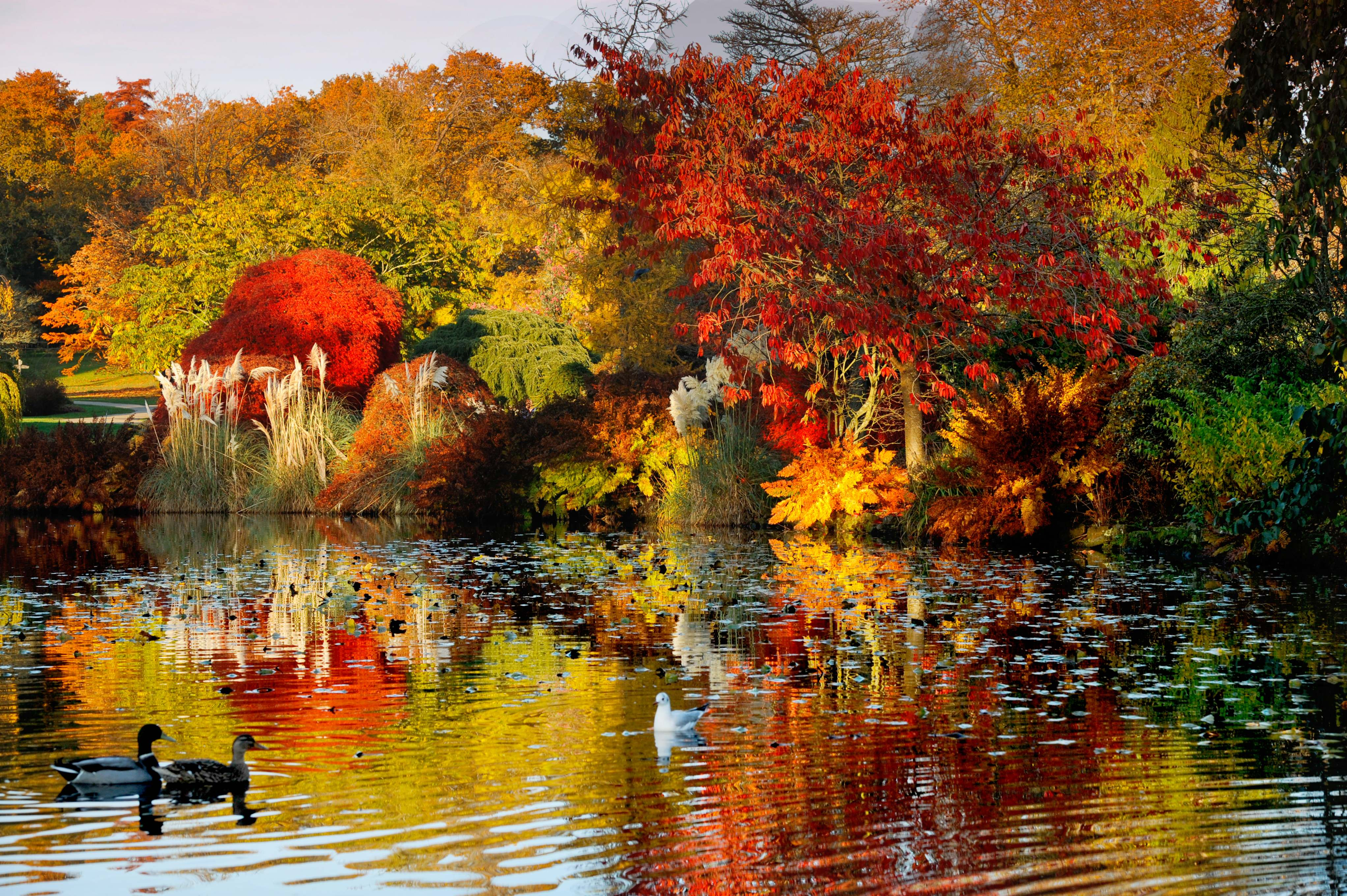 Autumnal colours reflect in the Lake at Wakehurst