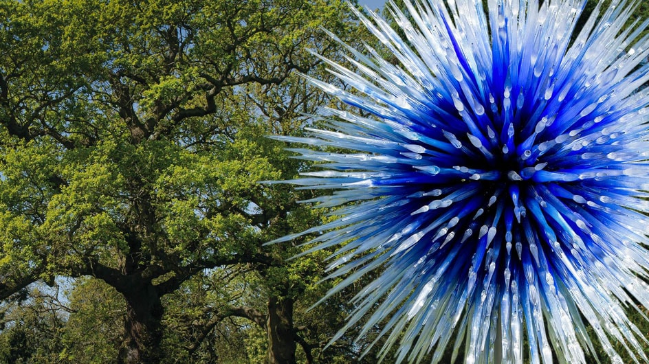 Chihuly Sapphire Star