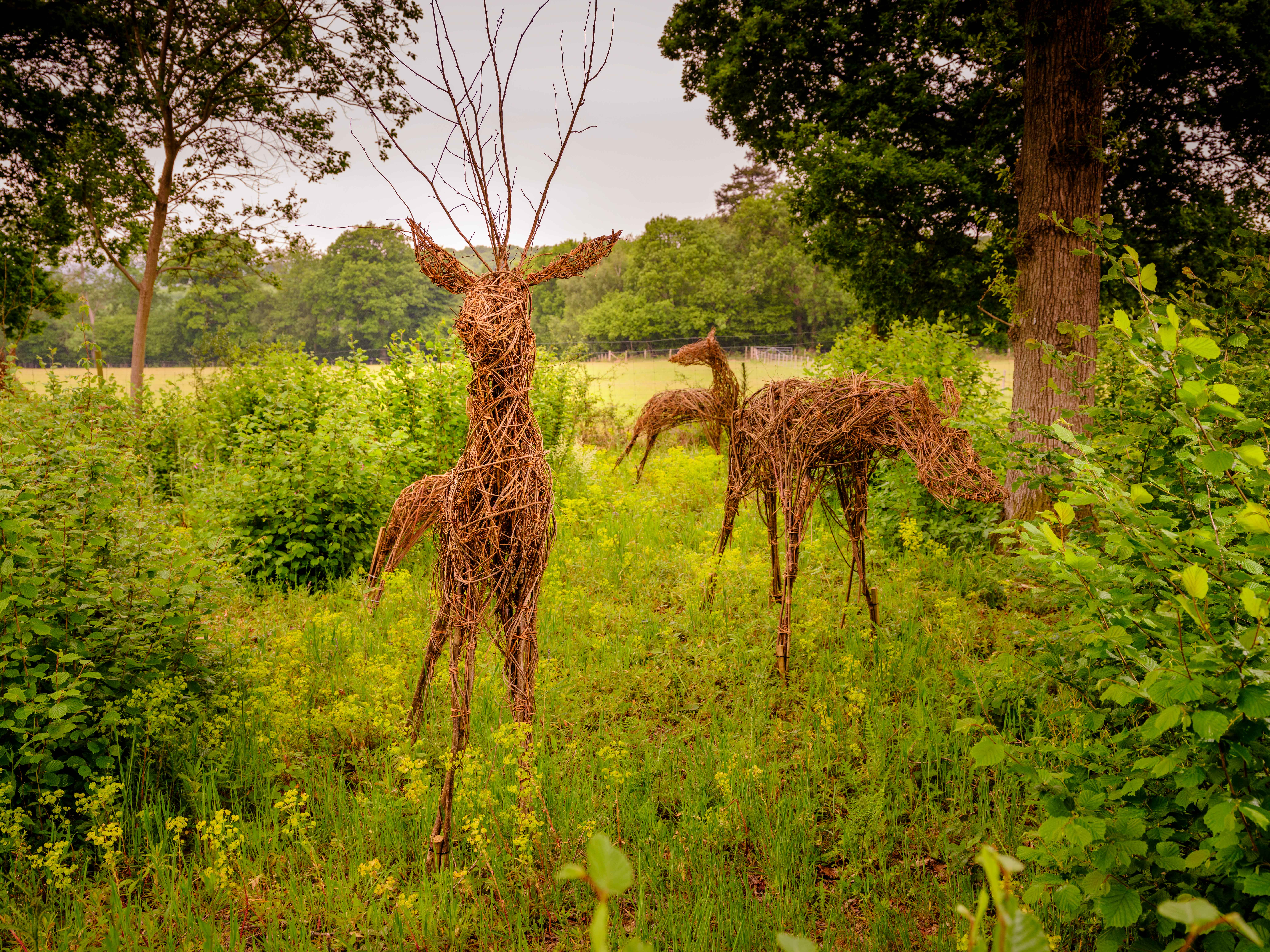 Hazel's flexible stems used to produce ornamental deer at Wakehurst. Credit: Jim Holden/RBG Kew.