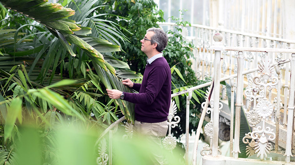 Scientist working in the Palm House