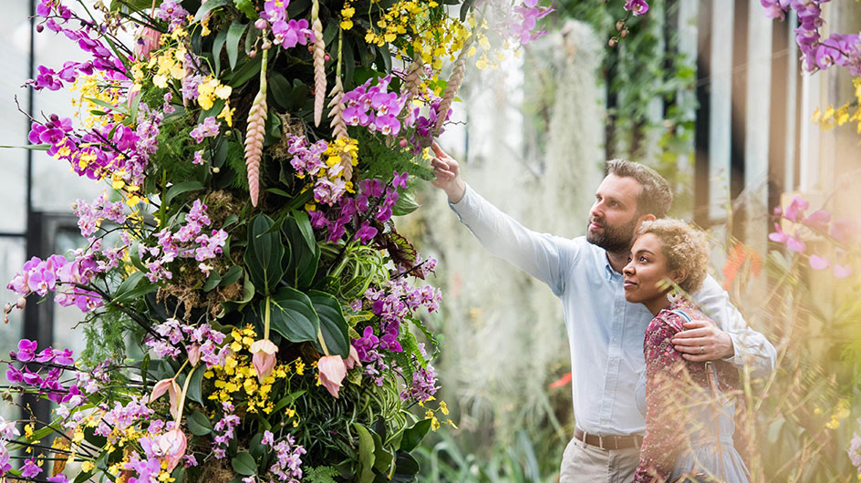 A couple explore the orchid festival