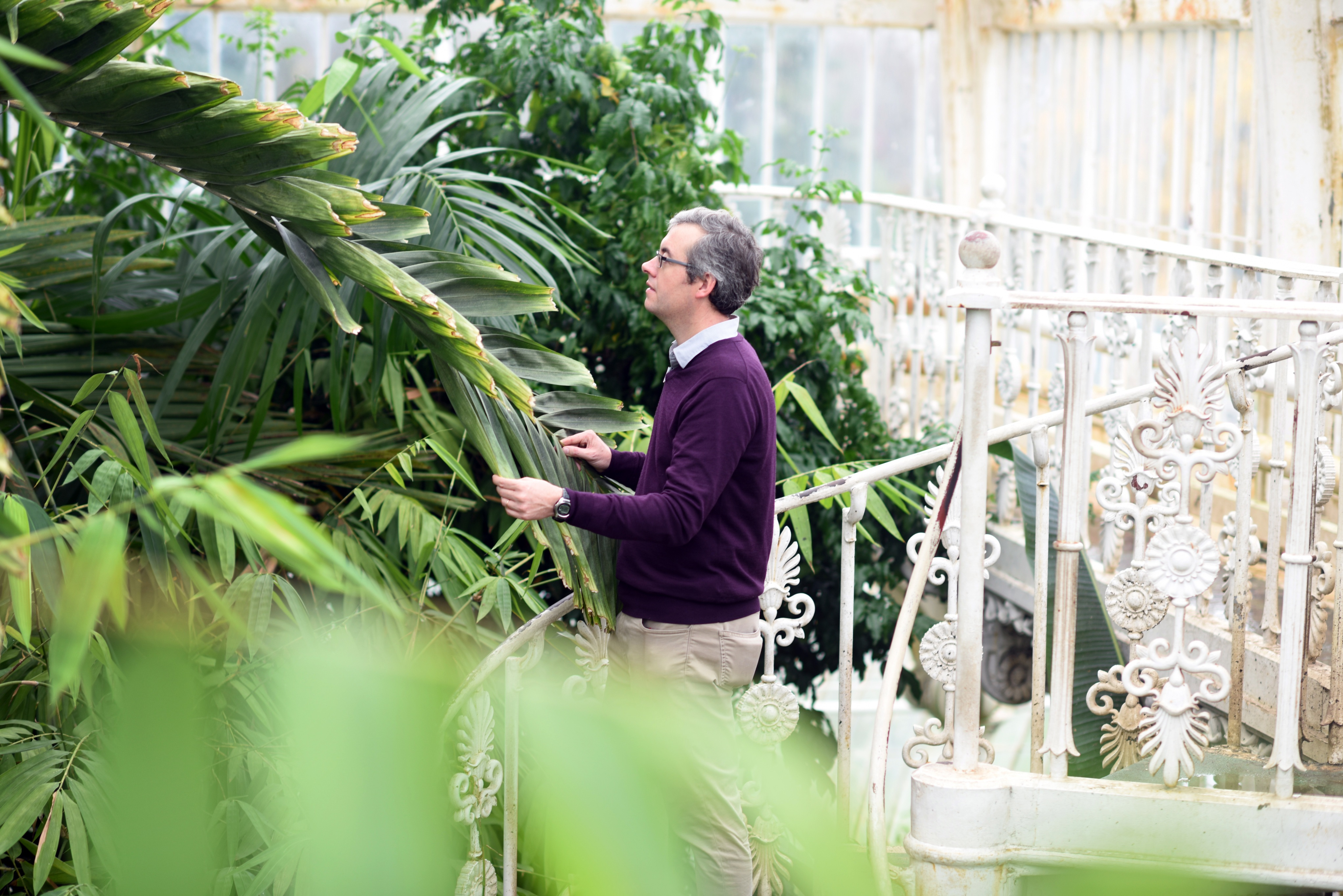 A visitor looks at the Temperate House from the spiral staircase