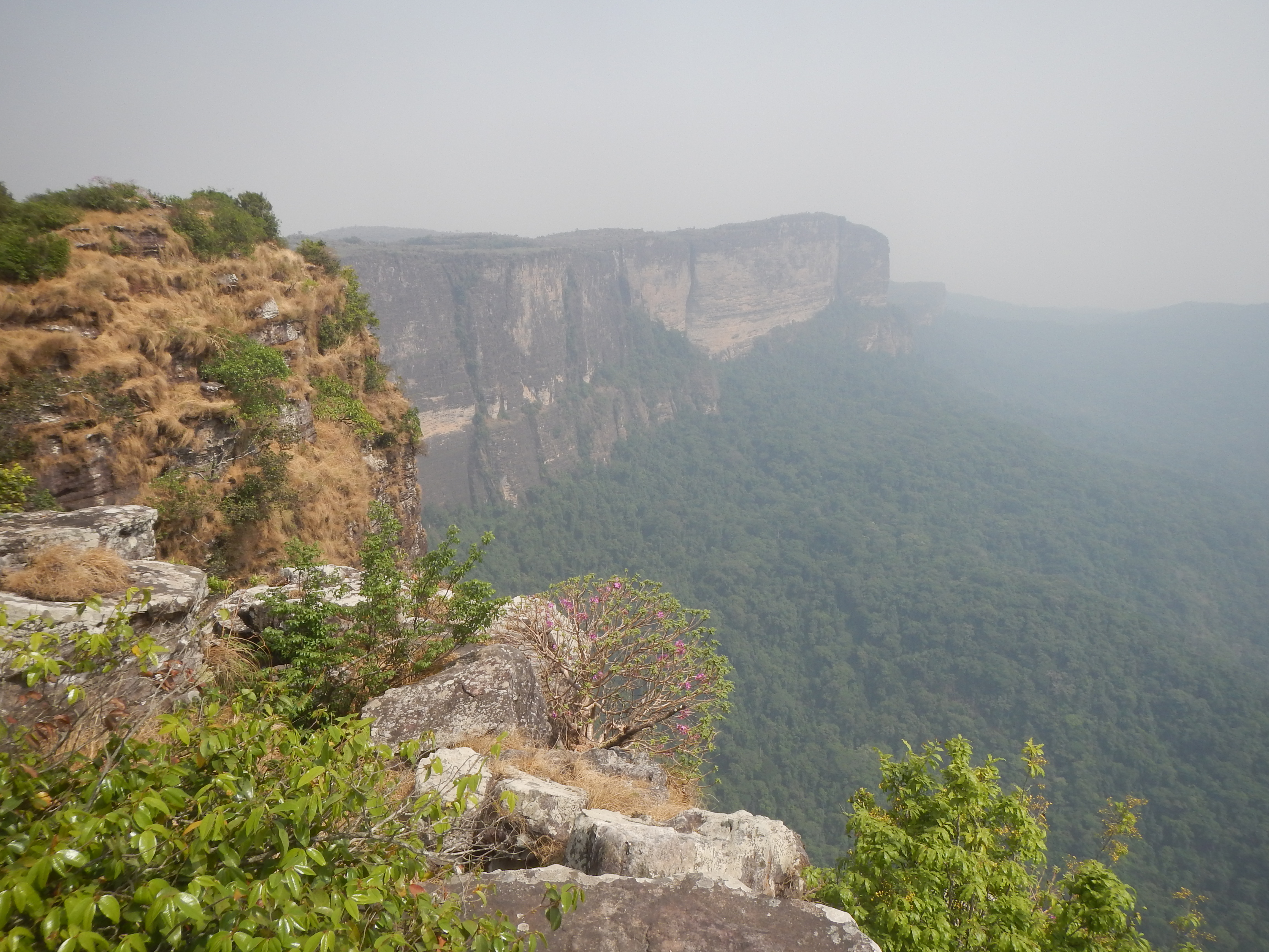 A mountain in Guinea which supports 8 globally unique plant species