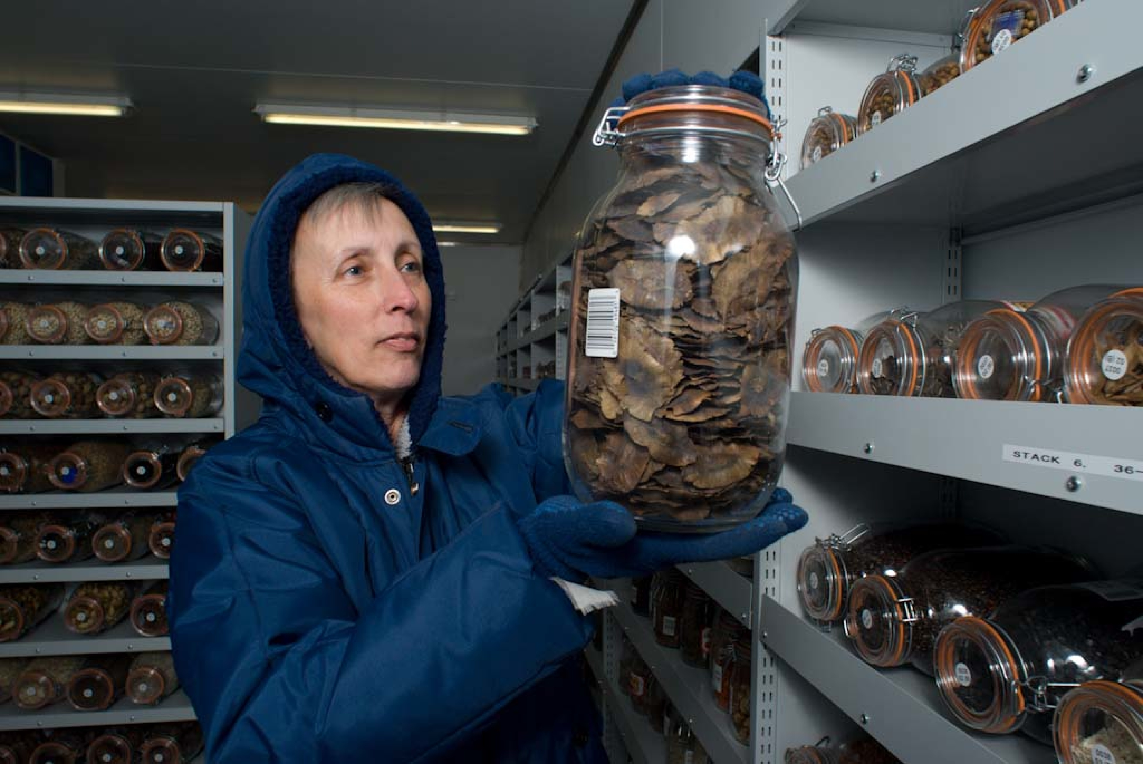 Researcher in the MSB cold rooms holding a jar of seeds
