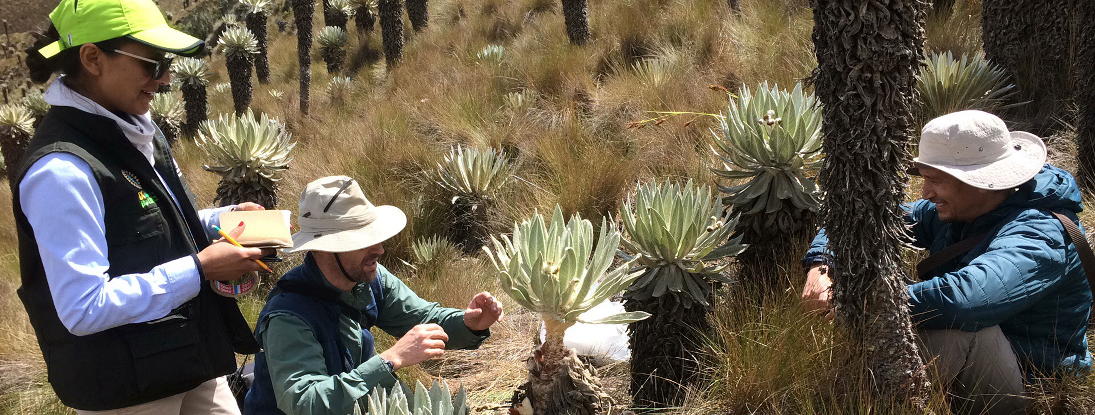 Researchers looking at plants in Colombian Paramos