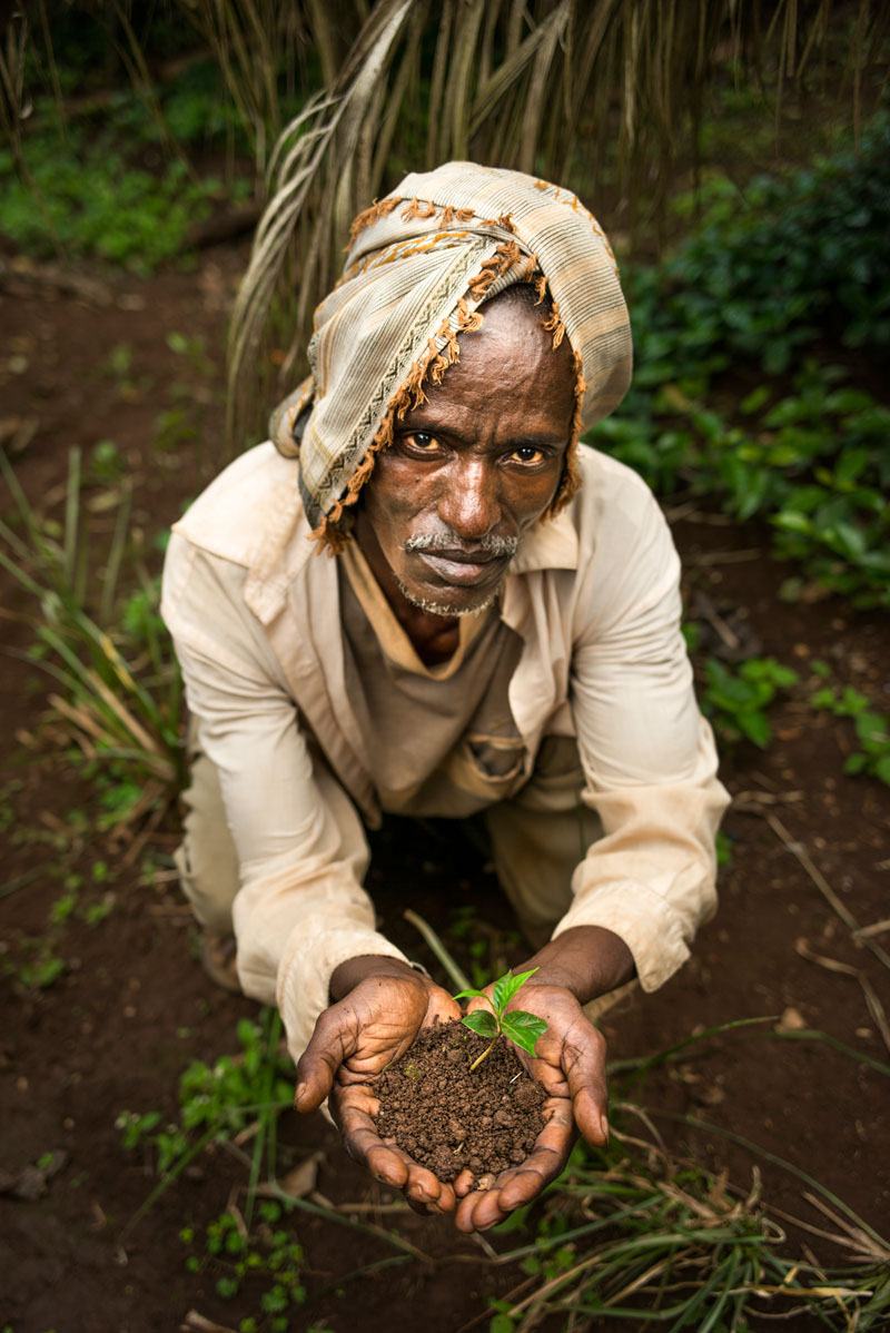Coffee farmer in Ethiopia with hands full of soil and a seedling