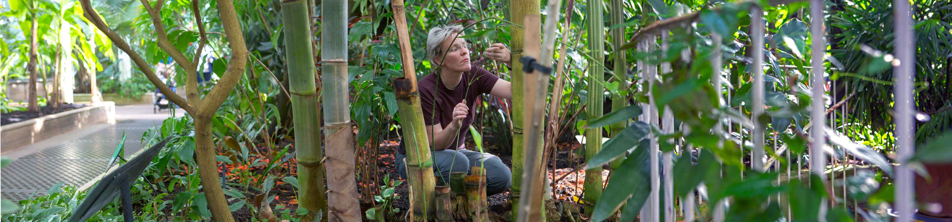 Researcher Maria Vorontsova in Palm House looking at Bamboo