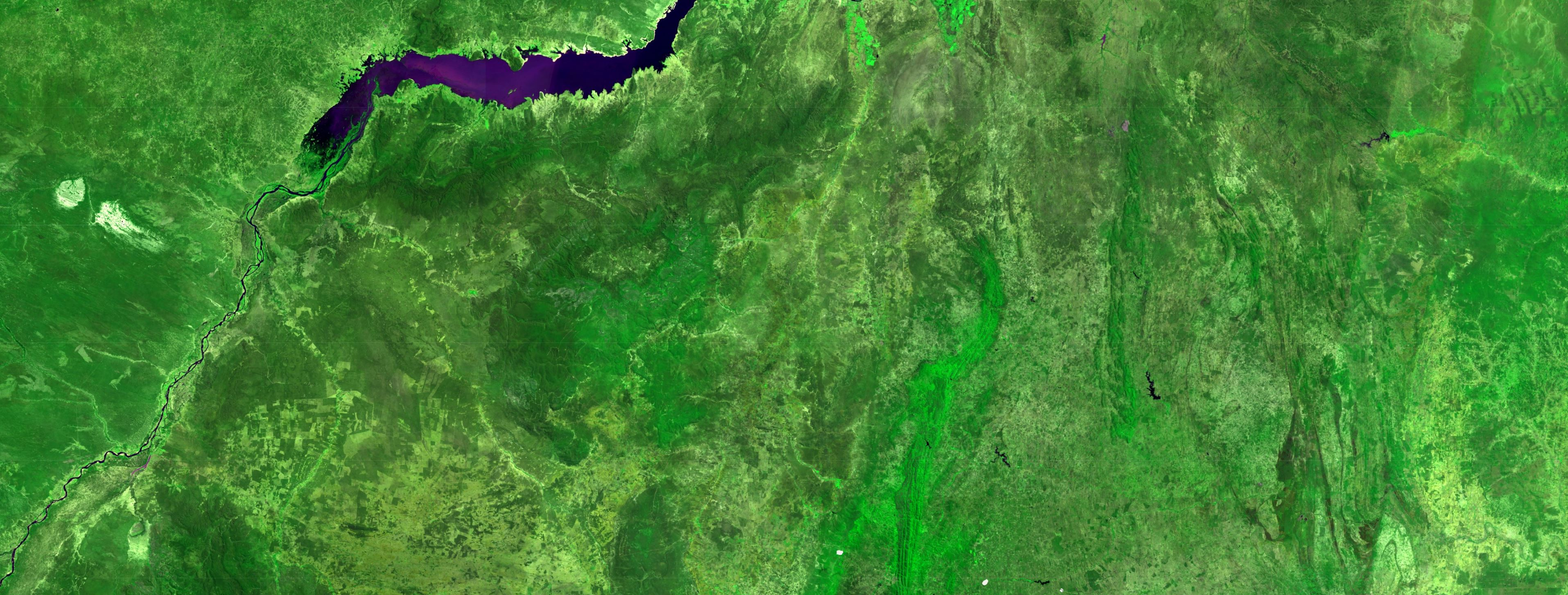 Satellite map of forest.