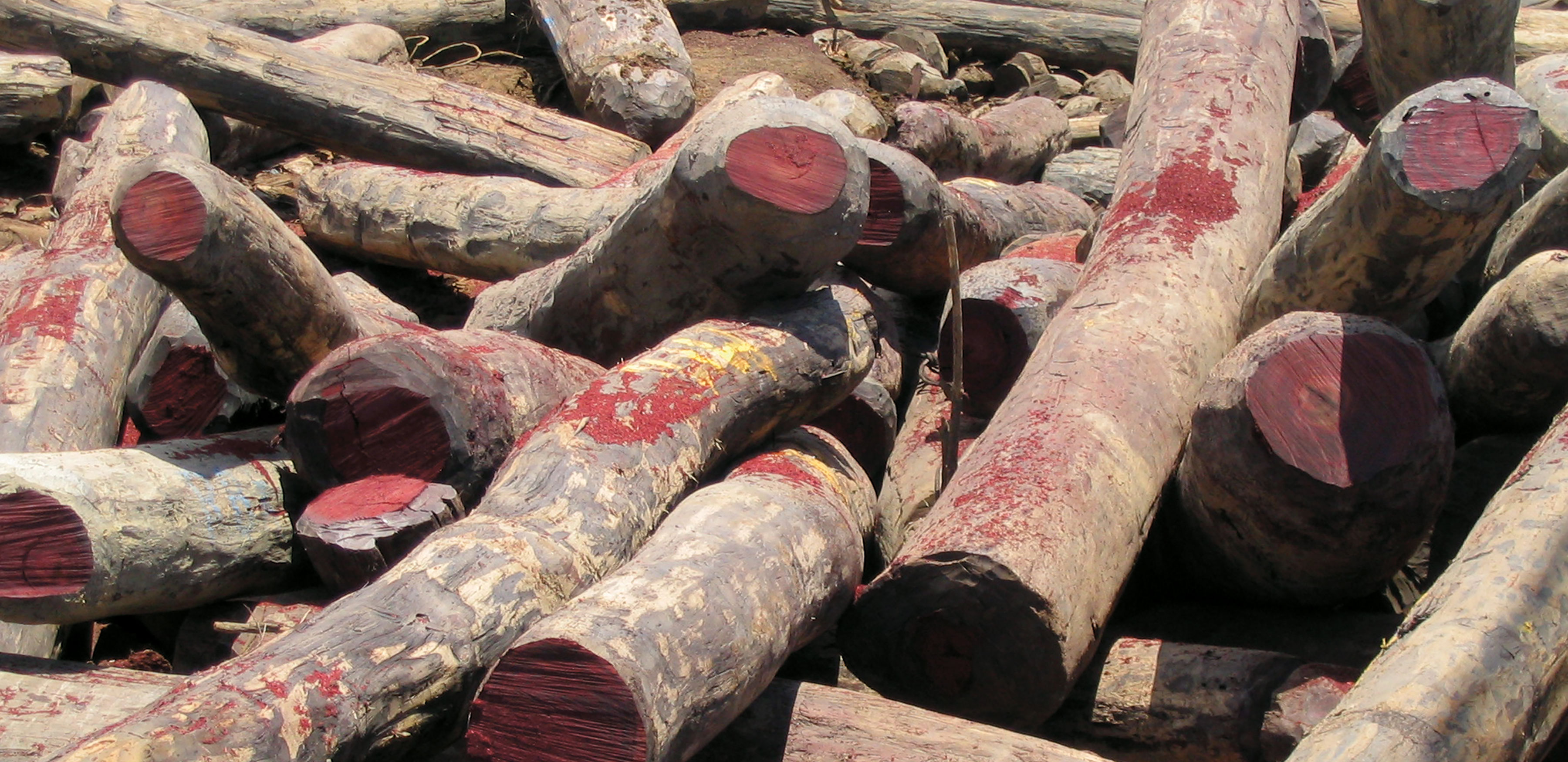 A pile of cut up rosewood logs