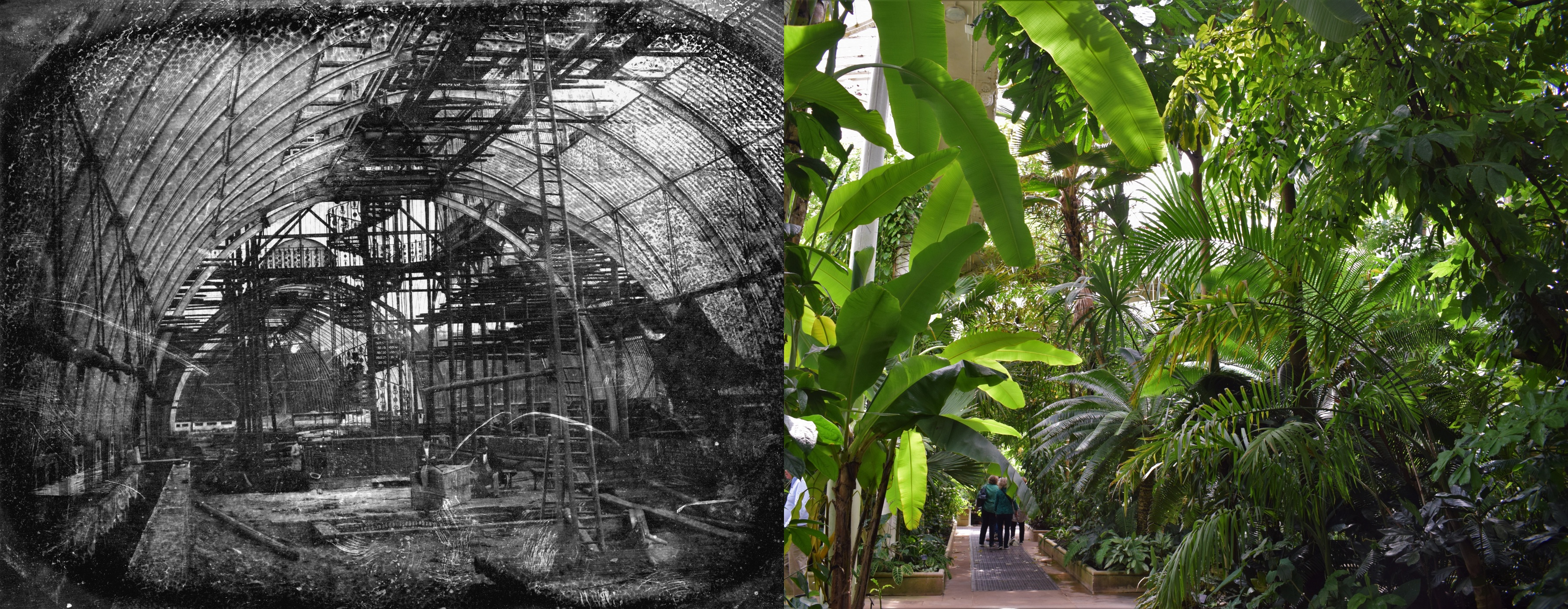 Palm House interior then and now