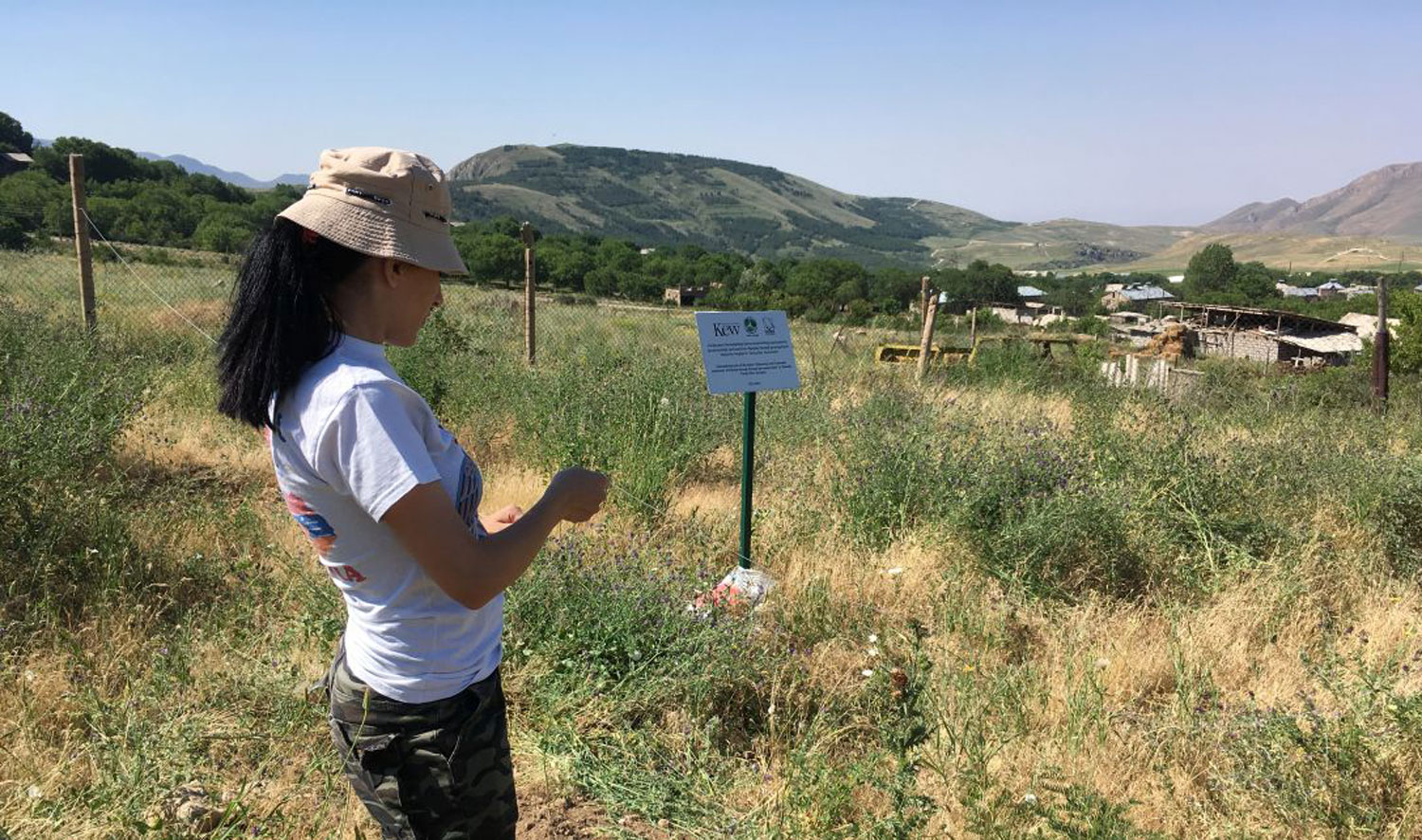 Lady in field next to a Kew sign in Armenia.