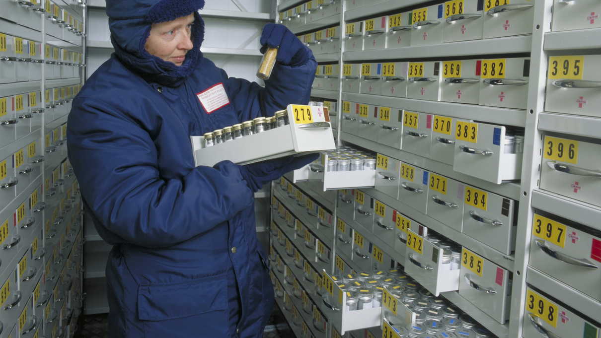 A scientist in the Millennium Seed Bank vault