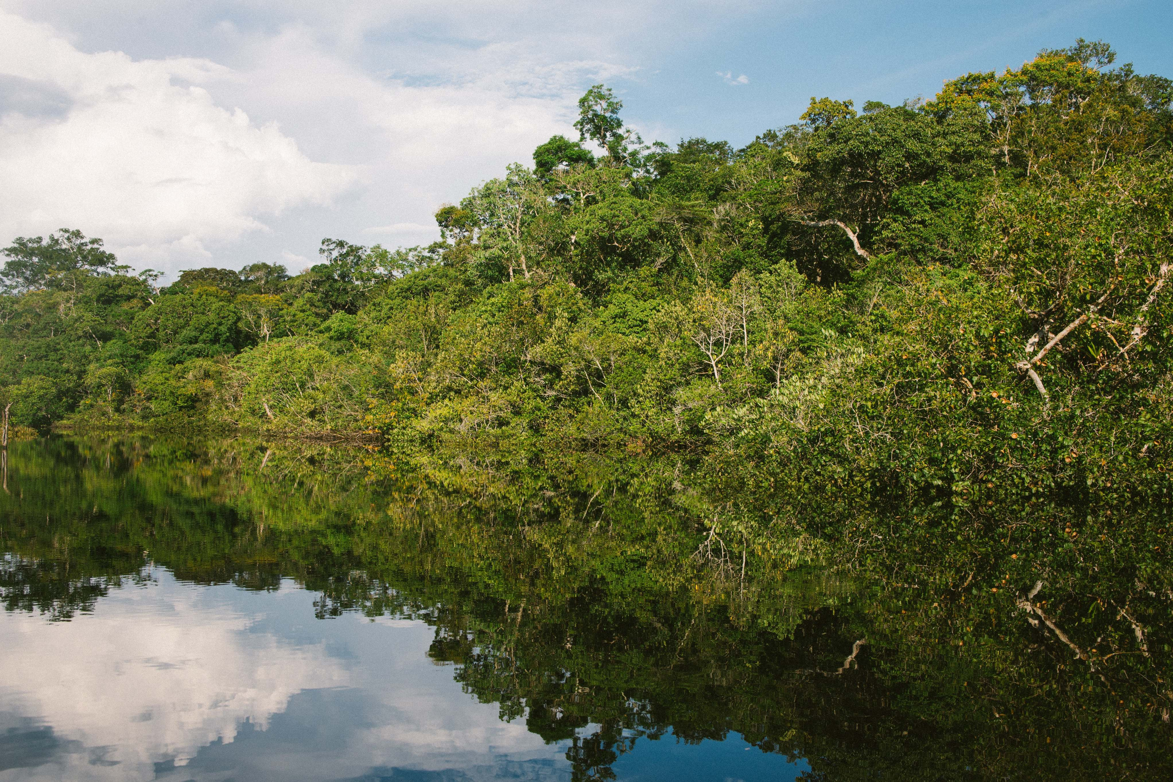An Amazon rainforest river scene