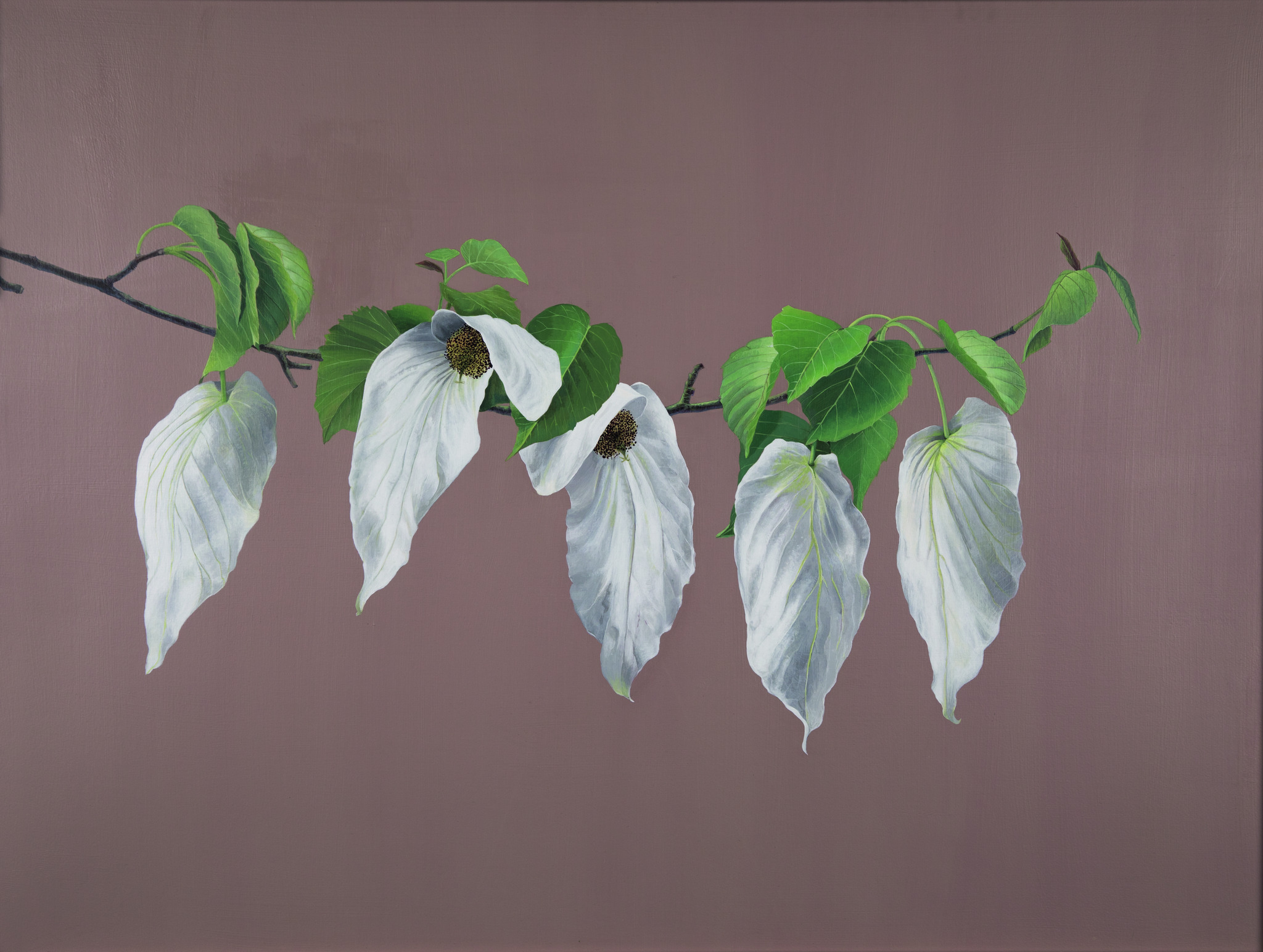 Dove or Pocket Handkerchief tree