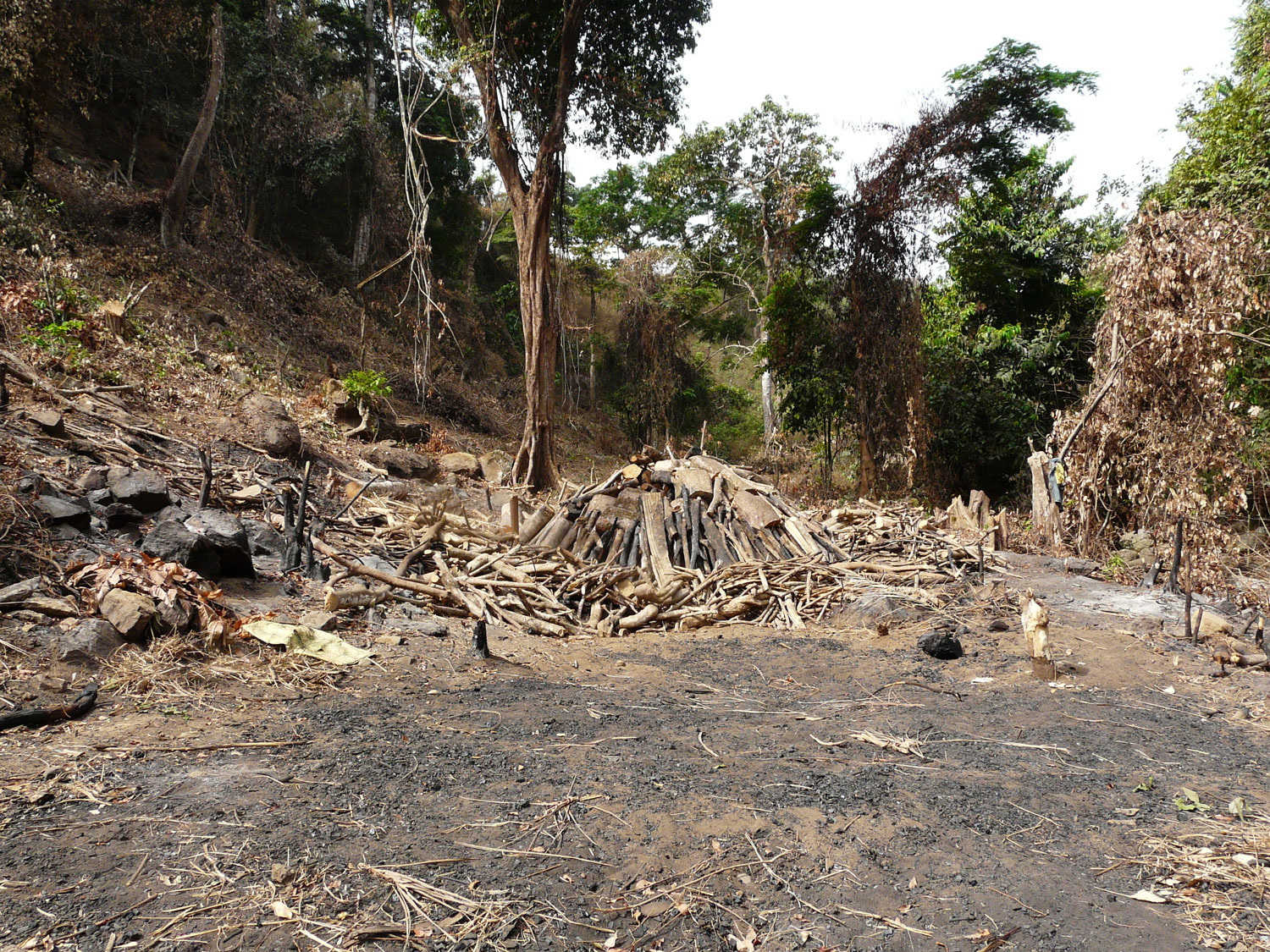 Area of forest cleared with piles of wood and charcoal