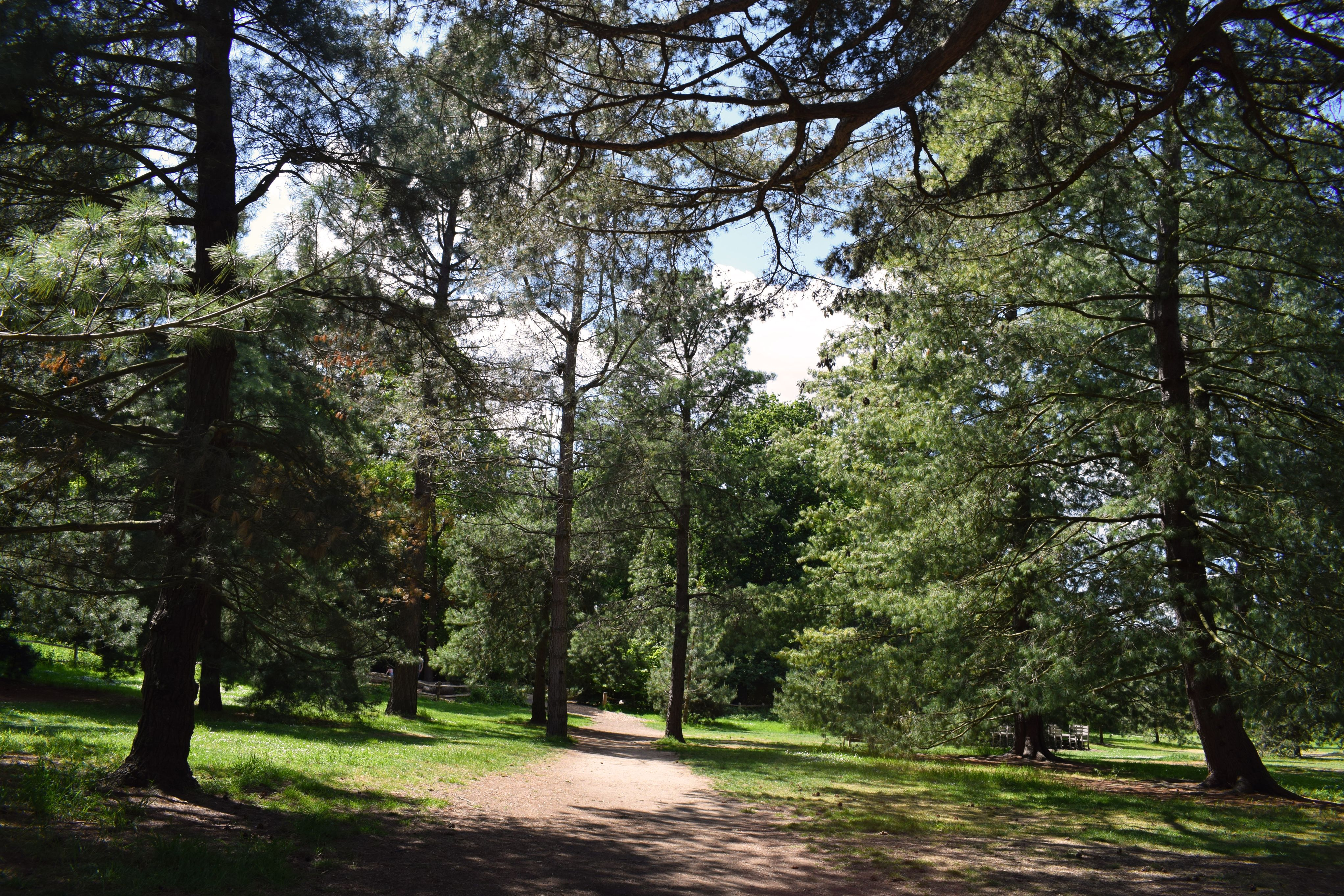 Several conifer trees within the Pinetum of Kew Gardens