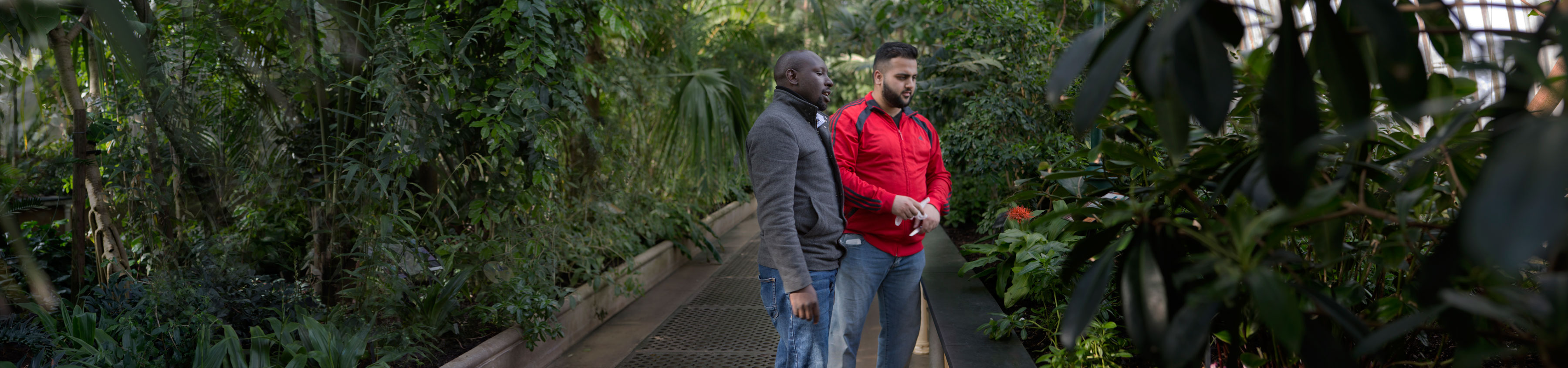 Researchers looking at plants in Kew's Palm house