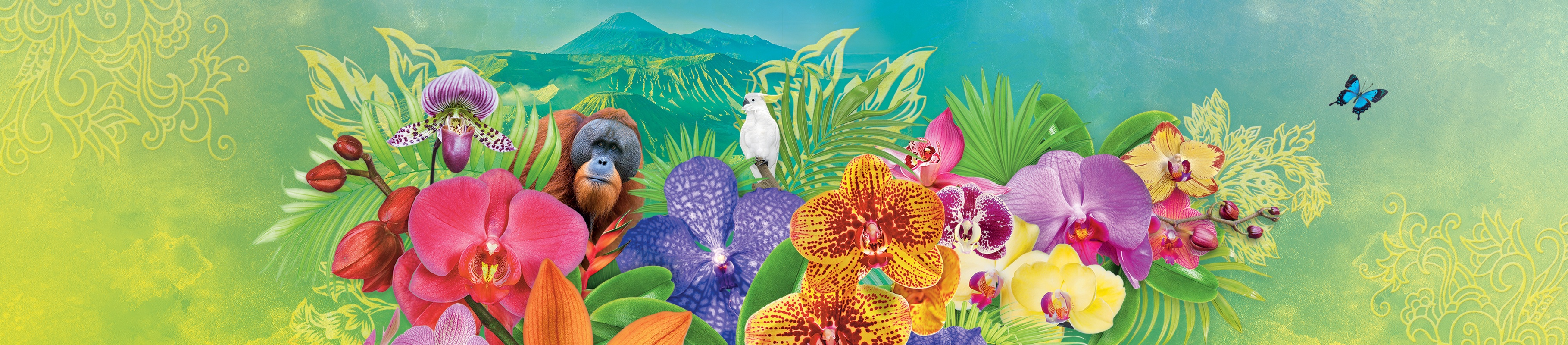 A colourful illustration featuring Indonesia orchids, orangutans, volcanos and other flora.