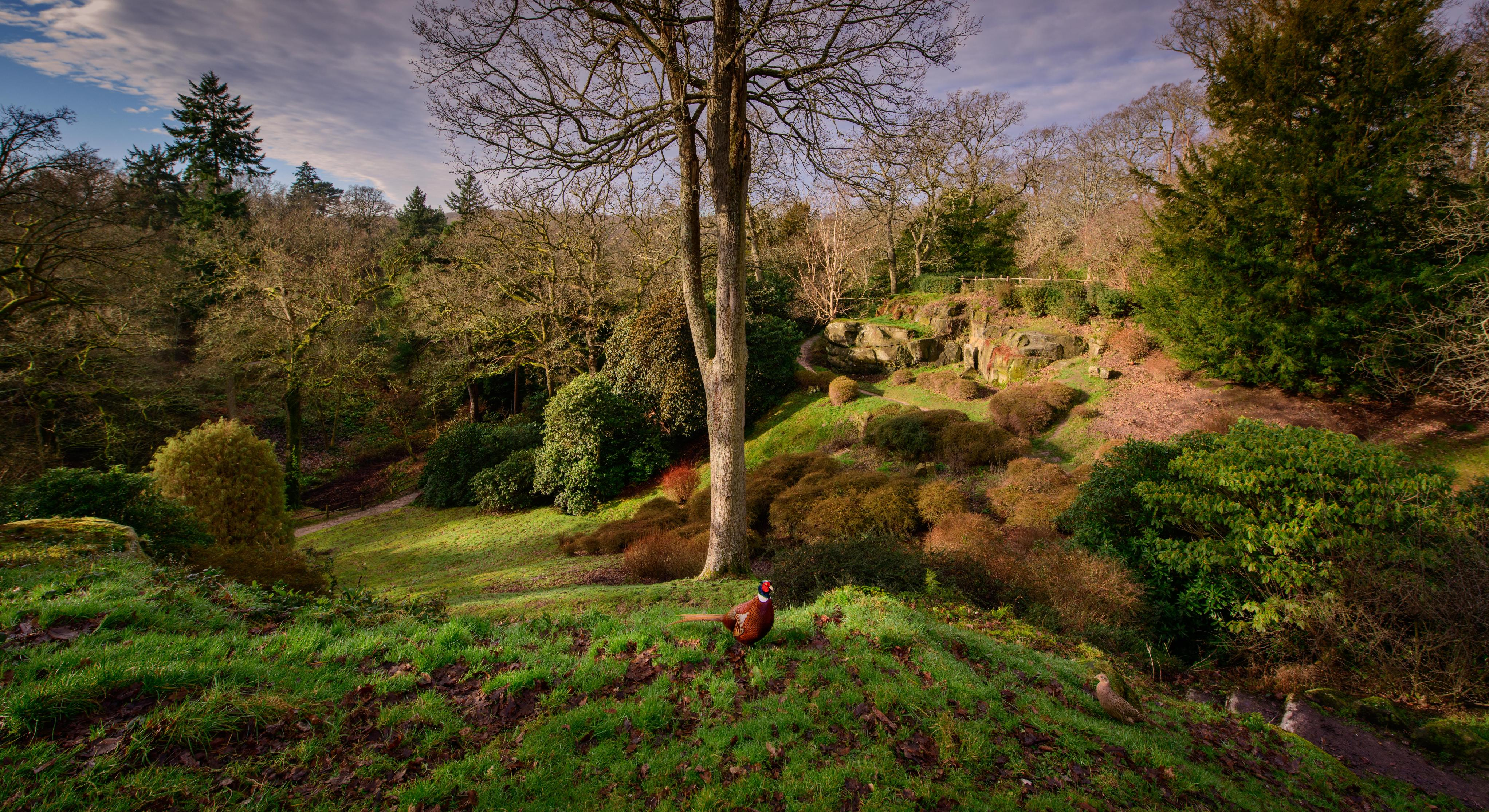 Himalayan Glade at Wakehurst in winter